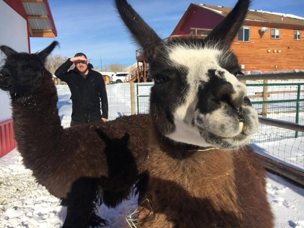 llama day trips